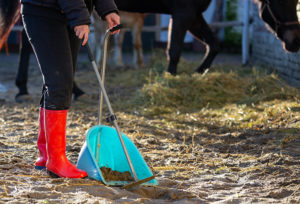 Cleaning a Horse Barn
