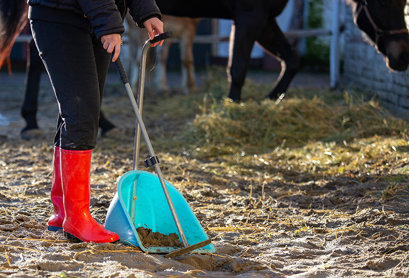 Properly Cleaning a Horse Stall